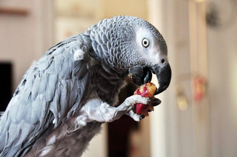 Попугаи – фото, описание, виды, ареал, рацион, популяция