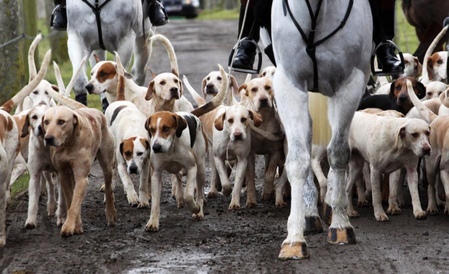 Популярные породы собак для охоты, их характеристики и охотничьи способности