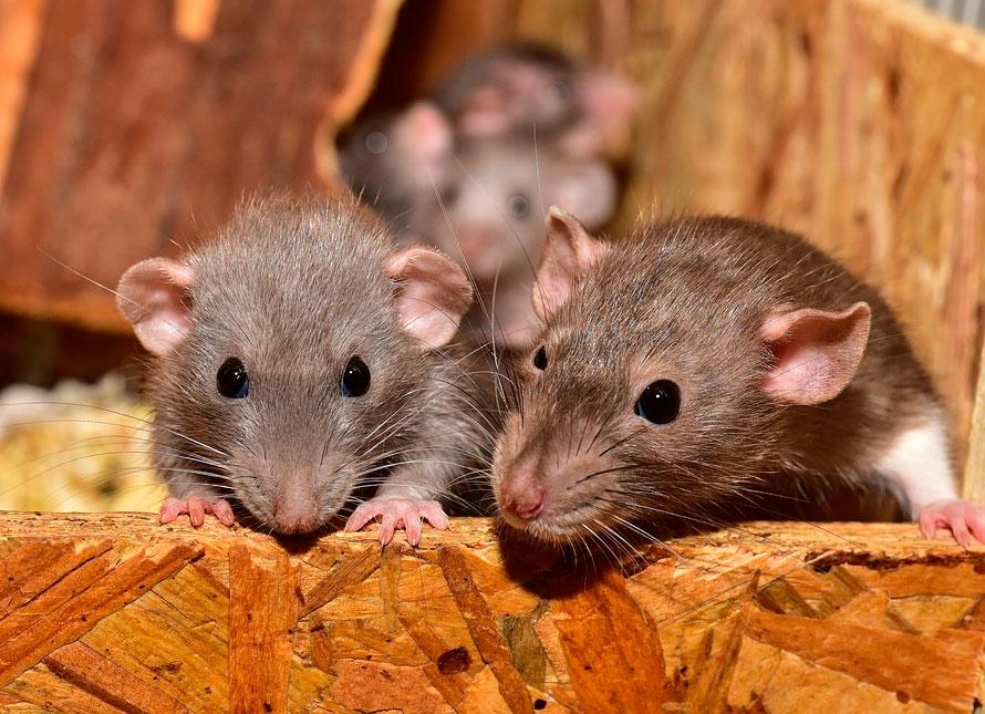 Мифы о животных: страусы и песок, слепы ли летучие мыши