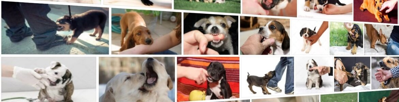 Отучаем щенка кусаться — простые советы от кинологов ⋆ собакапедия
