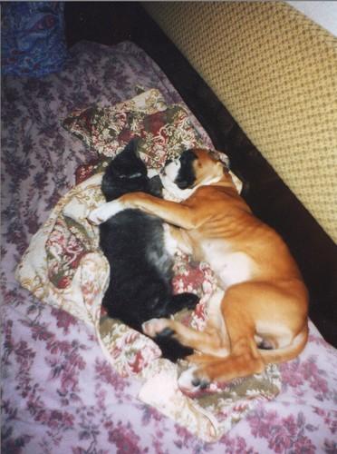 Как правильно подружить собаку и кошку в одном доме