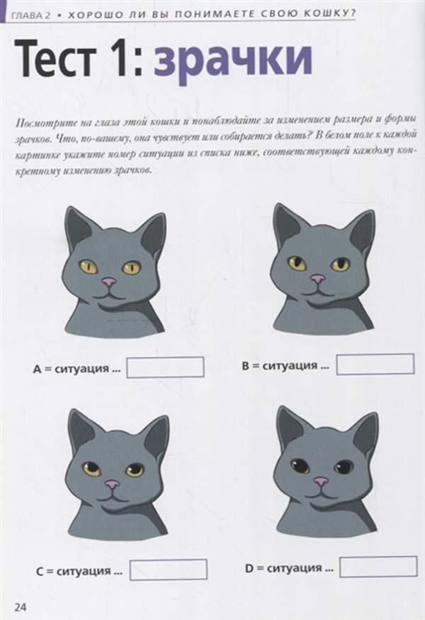 Как понять кошачий язык — ikirov.ru - новости кирова и кировской области