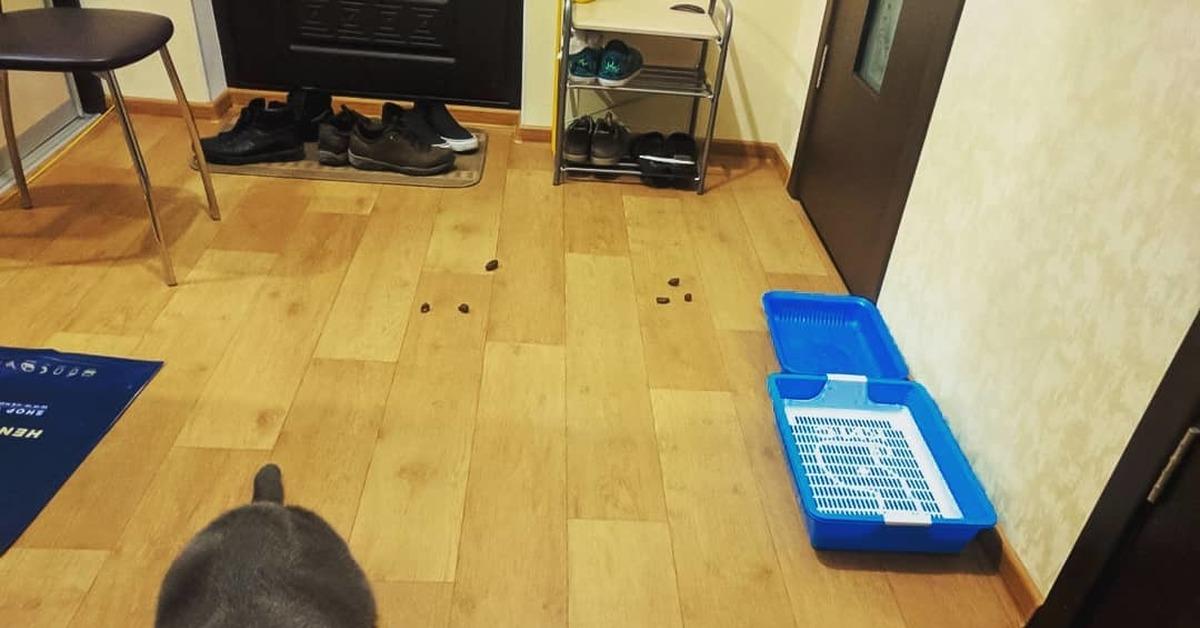 Кот ходит за мной по дому и мяукает без причины