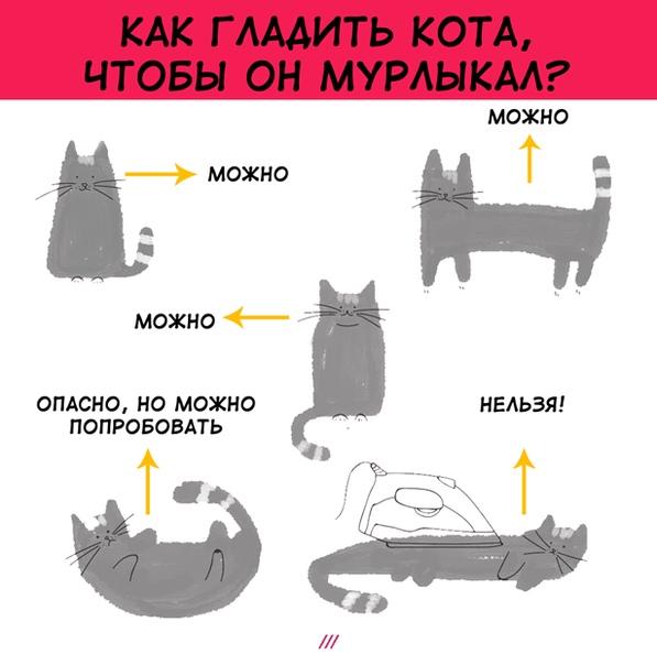Кошка любит когда гладят живот. почему кошки любят, когда их гладят