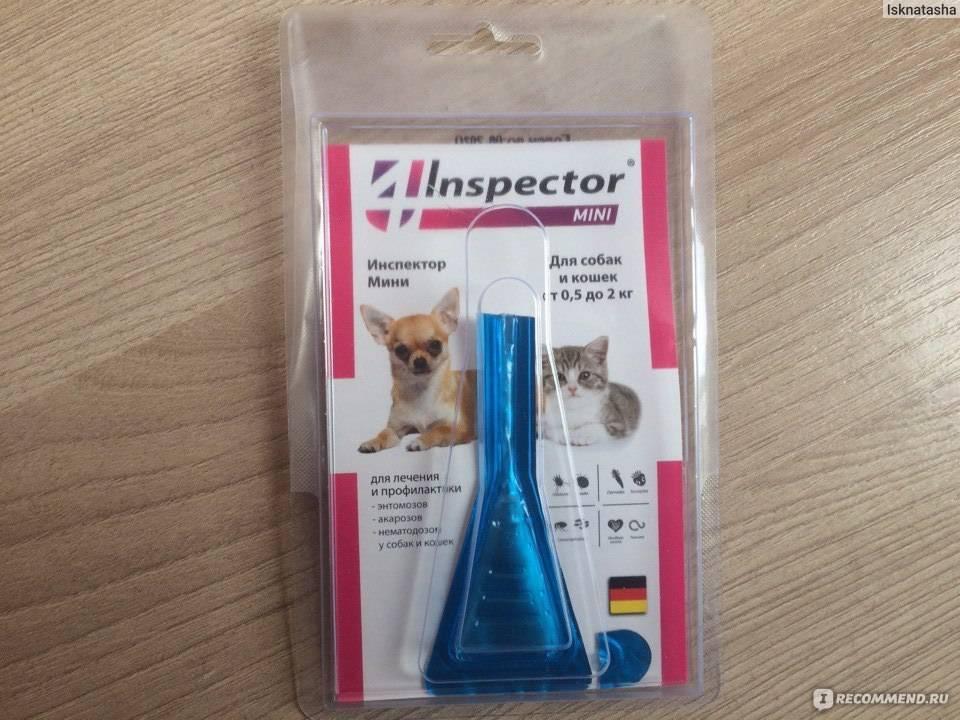 Капли инспектор для кошек – описание препарата и инструкция по применению: рассмотрим во всех подробностях