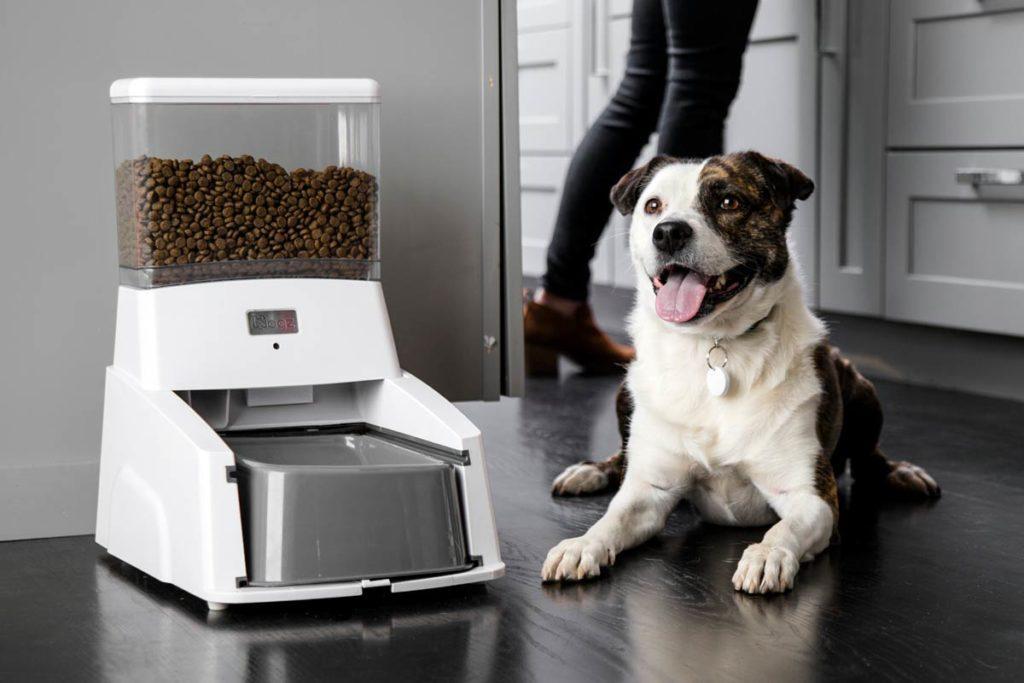 Топ-8 автоматических кормушек для кошек и собак