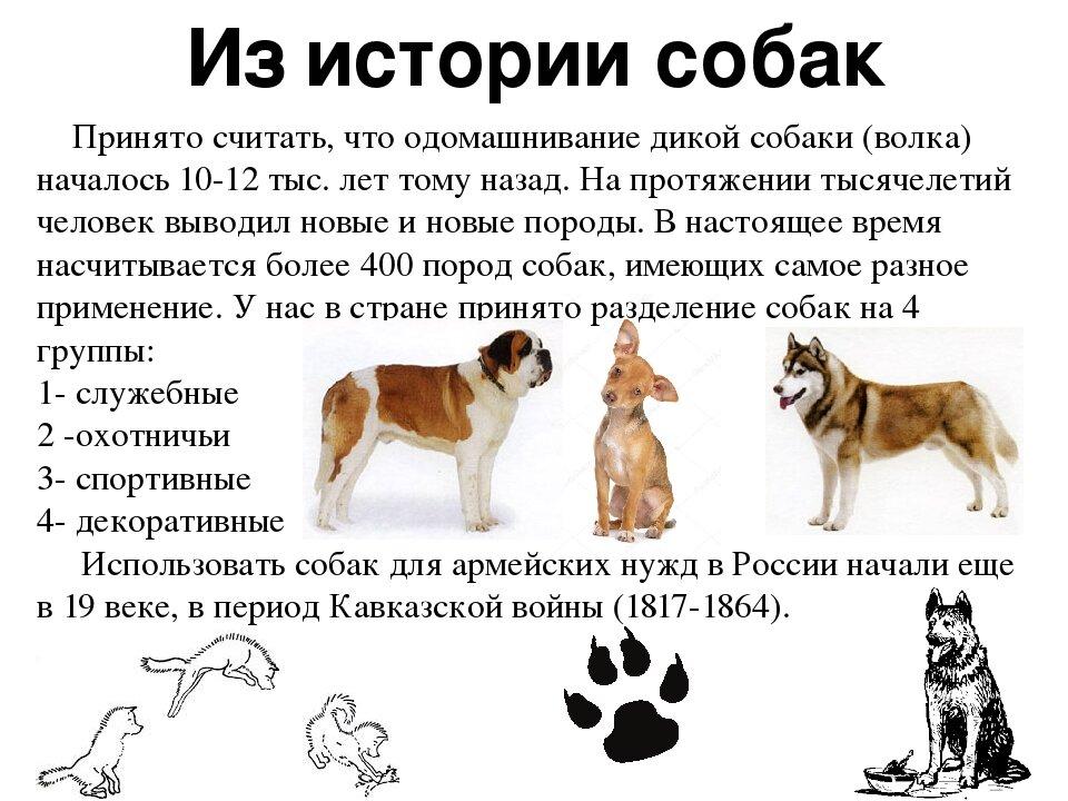 ᐉ сколько существует различных пород собак? - zoomanji.ru