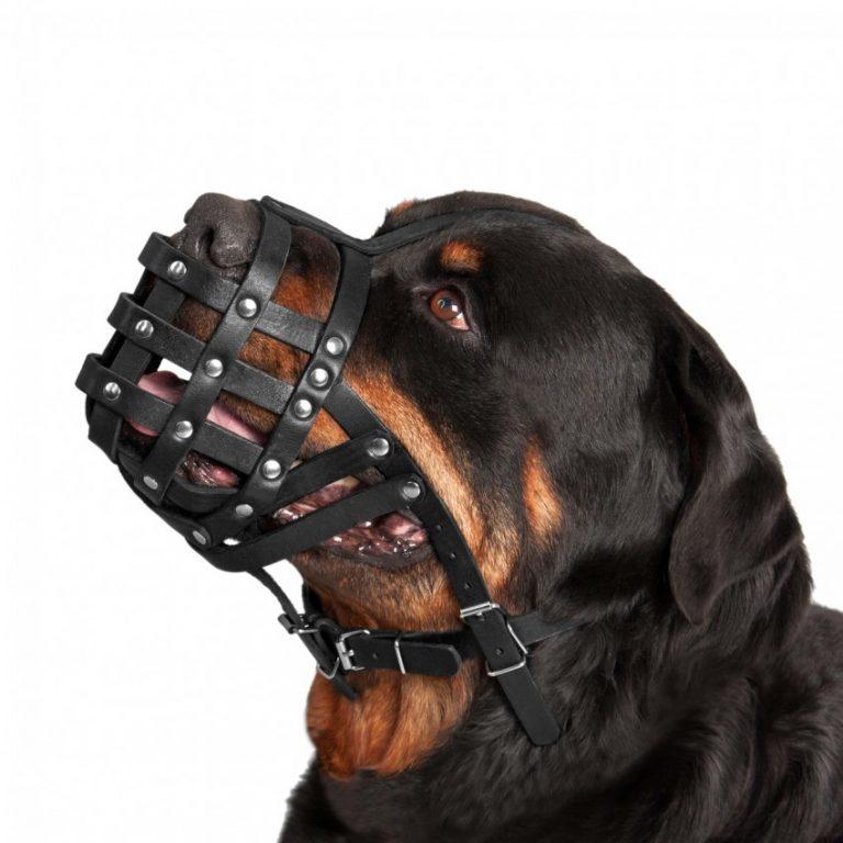 Средние породы собак: список представителей с фото