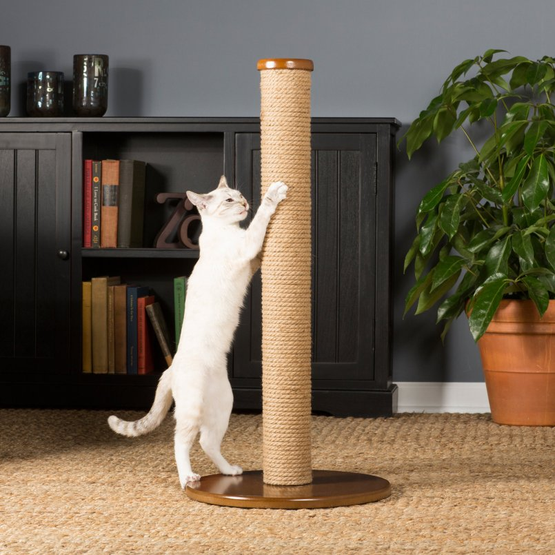 Как отучить кошку драть обои и мебель и что сделать чтобы кот не царапал диван