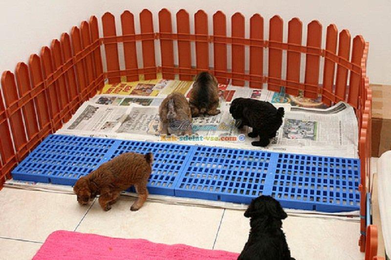 Эффективное руководство: как приучить щенка к туалету на пеленку в квартире