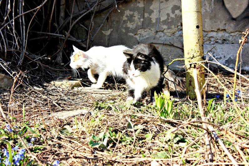 Чем дворовые (живущие в хозяйстве, частном секторе) коты и кошки отличаются от уличных и чисто домашних – 7 пунктов | заметки зооработника | яндекс дзен