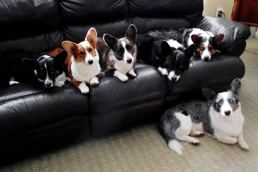 Самая ленивая порода собак для квартиры