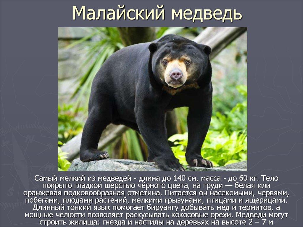 Виды медведей. описание, названия и особенности медведей   животный мир