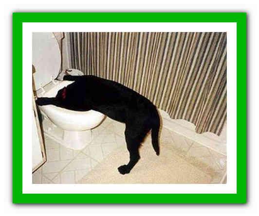 """Рвота у собаки: виды, причины и помощь животному   блог ветклиники """"беланта"""""""