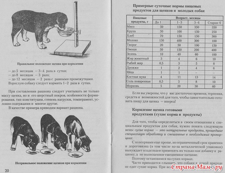 Чем кормить щенка немецкой овчарки — рацион питания, график кормления для маленького немца