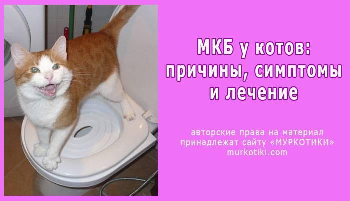 Лечение мочекаменной болезни у кошек