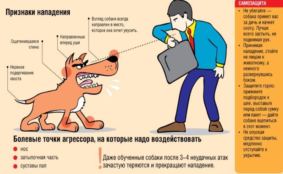 Что делать, если нашел бездомное животное?