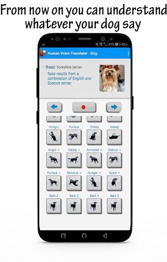 Звук собаки лай лает собака слушать скачать онлайн громко