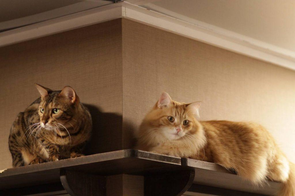 Выбираем питомца по полу: кот или кошка — кто лучше?