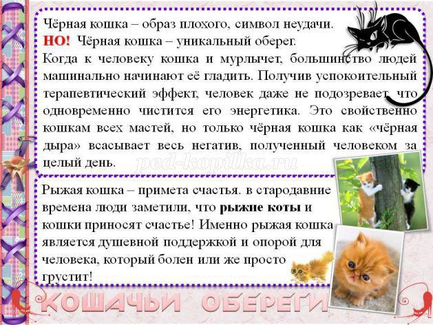 Почему чужая кошка приходит в дом, толкование приметы в зависимости от цвета шерсти