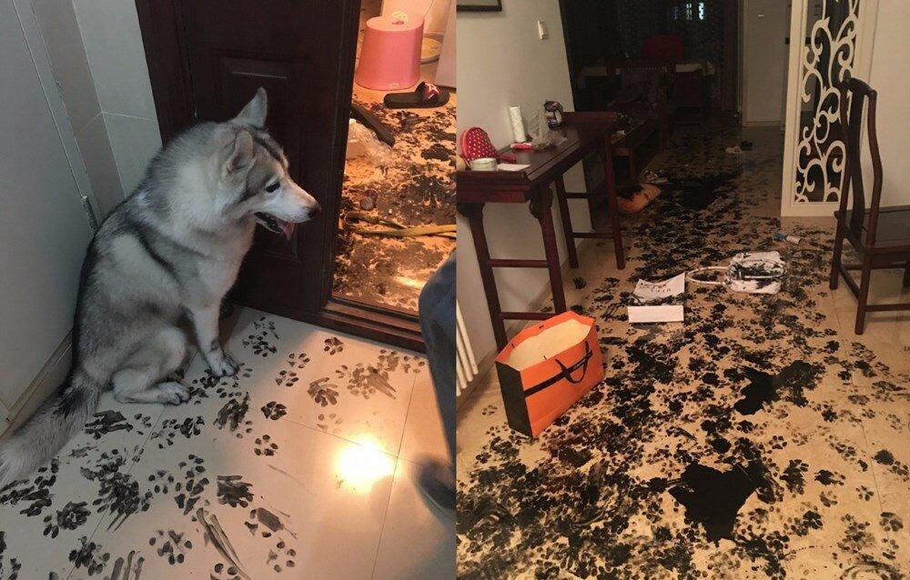 Что делать, если собака грызет дома все подряд в отсутствие хозяина, как отучить