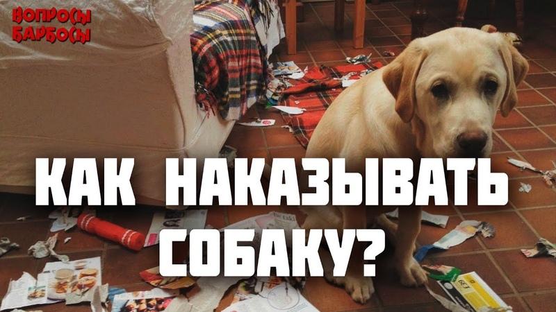 Как правильно наказывать собаку за непослушание