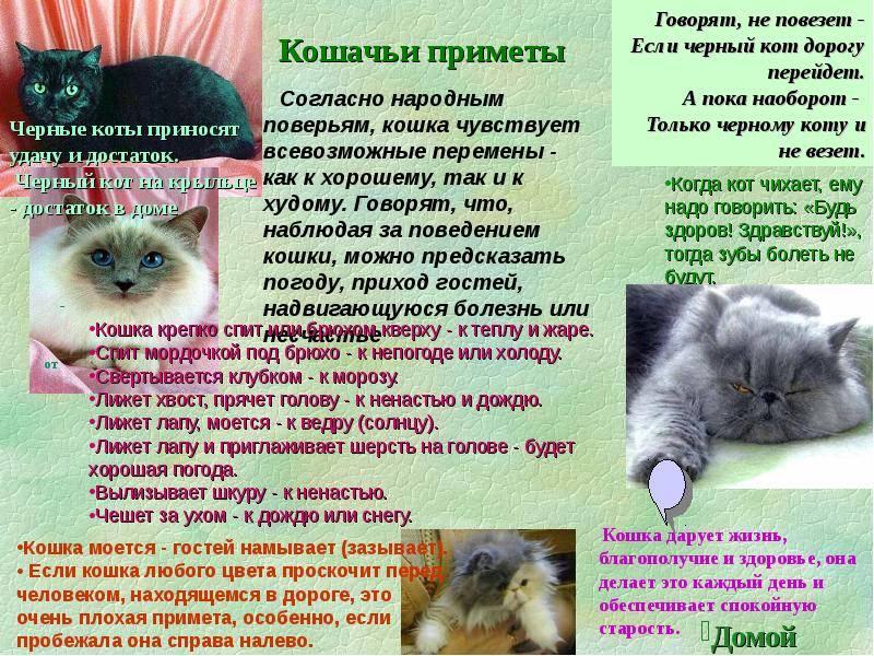 Приметы про кошек . цвета кошек. поведение, события