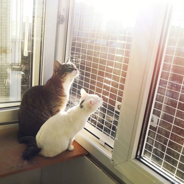 Кошки — приметы, суеверия, поверья. приметы про черных, белых, рыжих, серых, трехцветных кошек в доме. к чему кошка пришла в дом, ушла из дома, рожает, гадит, умывается, чихает, умирает, катается по полу на спине, сидит на окне, перебегает дорогу?