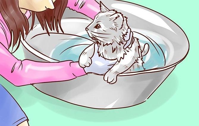 Нужно ли мыть домашних кошек и как это делать?
