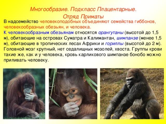 Виды обезьян, разновидности обезьян названия и фото