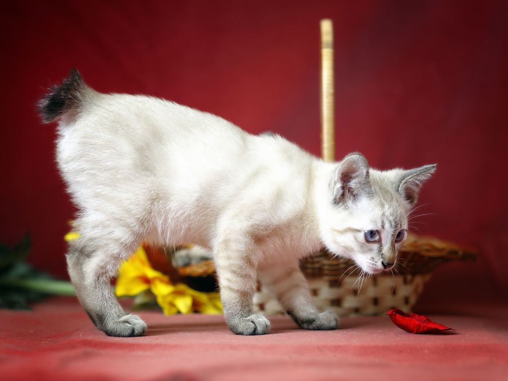 Мой нежный и ласковый кот: 15 пород