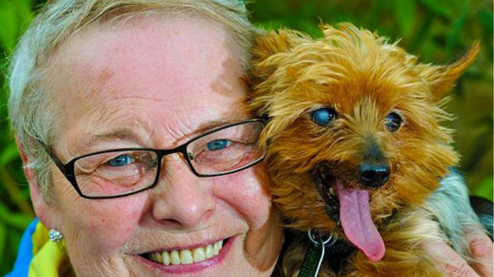 Самая старая собака в мире — породы-долгожители с фото и названиями