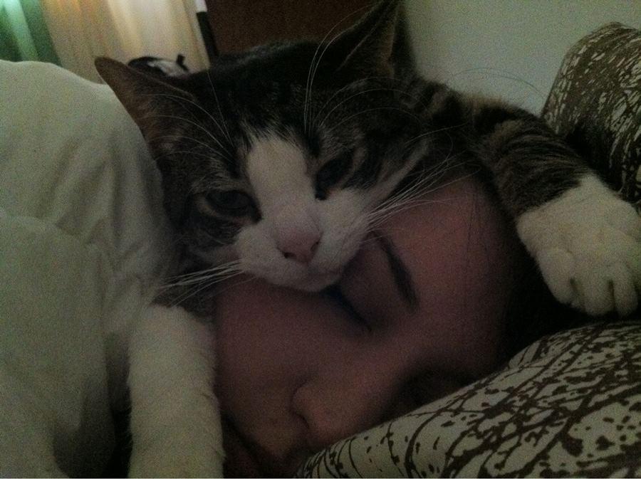 Кошка любит спать на постели своих хозяев: разрешать или нет?