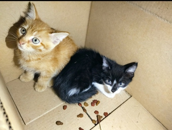 Имена для котов мальчиков - сотни красивых и прикольных кличек!   сайт «мурло»