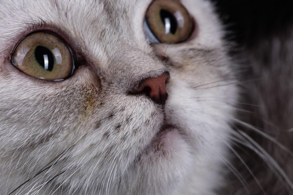 Если у кошки или собаки красные глаза. что делать, лечение, причины