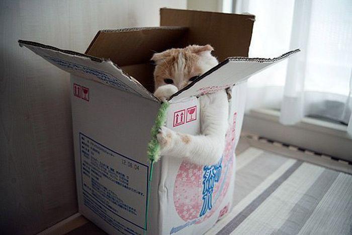 Почему котики так любят залезать в коробки, которые часто им даже не по размеру — 5 причин такой любви к картону и 35 забавных фото в придачу