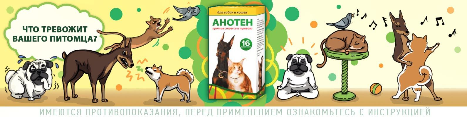 Анотен для собак и кошек: инструкция по применению, назначение, ограничения