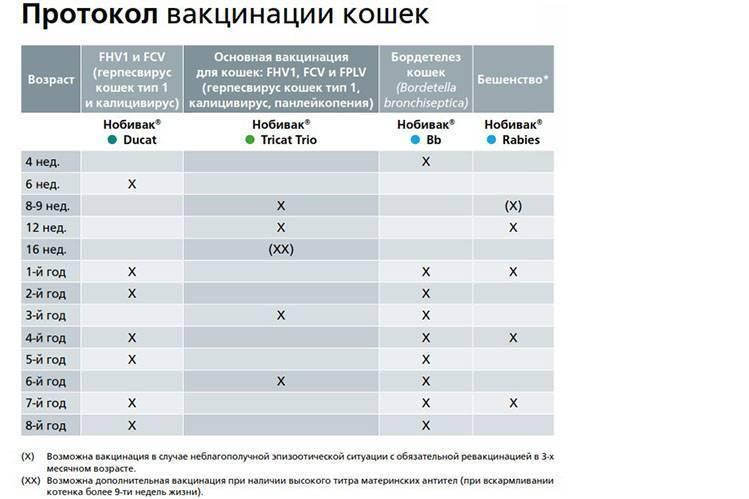 Какие прививки нужны щенку: таблица для покупателей и заводчиков