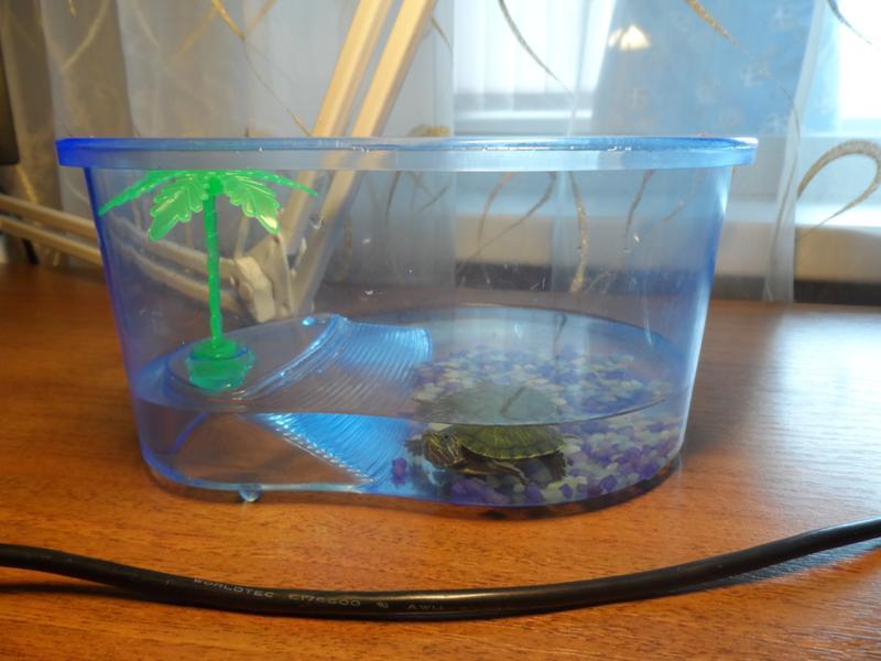Лучший аквариум для красноухих черепах
