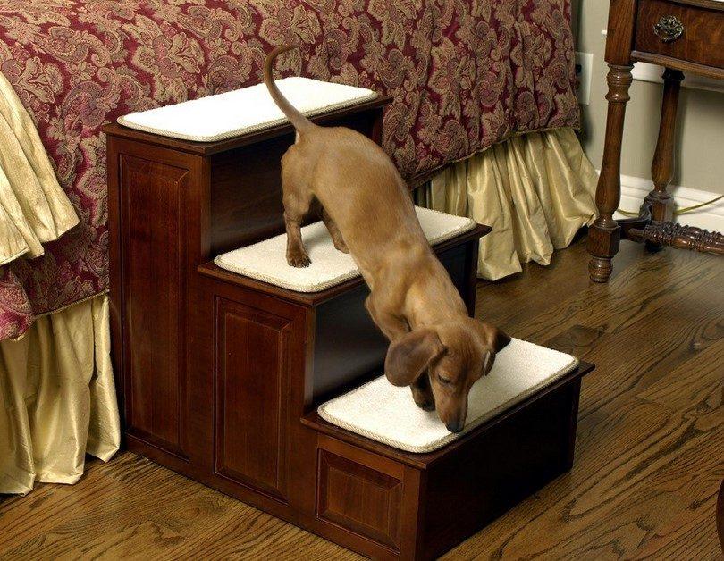 Как не подпускать собак к вашему газону - wikihow