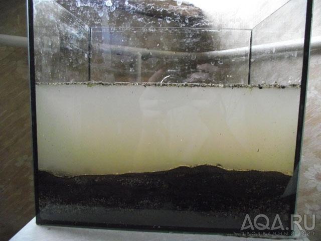 Проблемы с водой в аквариуме: вода мутнеет, пахнет или появилась пленка