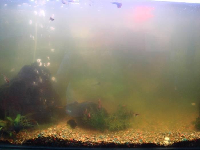 Почему в аквариуме мутная вода: причины и способы устранения