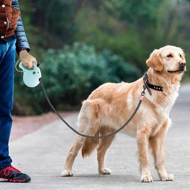 С какого возраста со щенком можно гулять