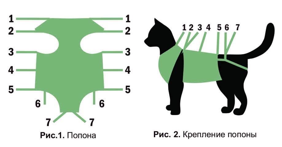 Многообразие видов попон для кошек, варианты как сшить своими руками, как одеть