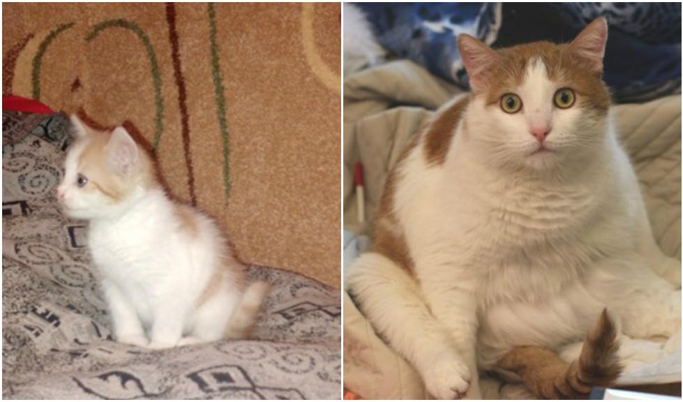 До какого возраста растут коты и кошки разных пород