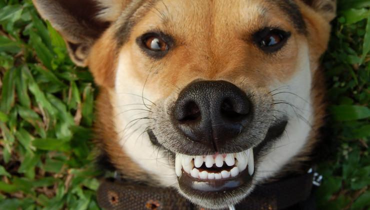 Почему у собаки пахнет изо рта тухлятиной: причины и методы устранения
