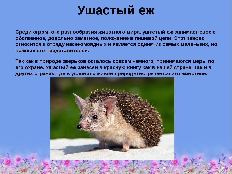 Еж ушастый (hemiechinus auritus): виды, фото, интересные факты