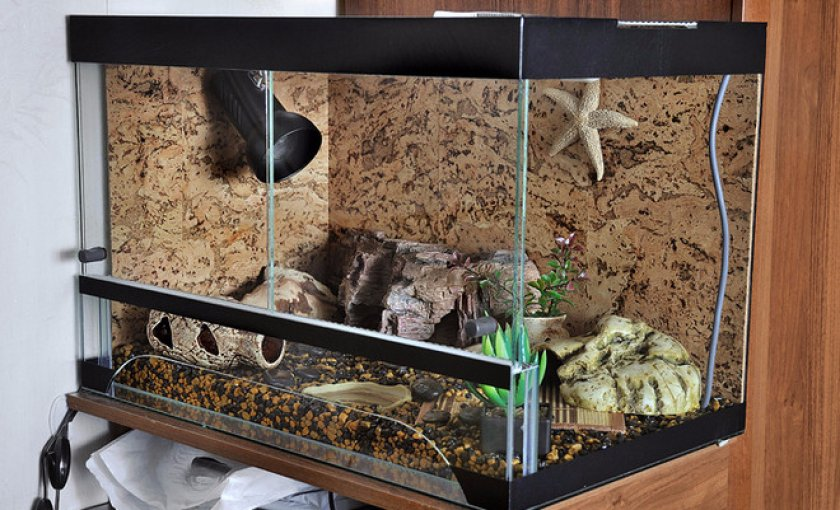 Как выбрать террариум для сухопутных черепах? :: syl.ru