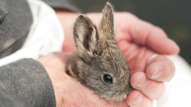 Милый кролик: самые красивые и пушистые в мире породы