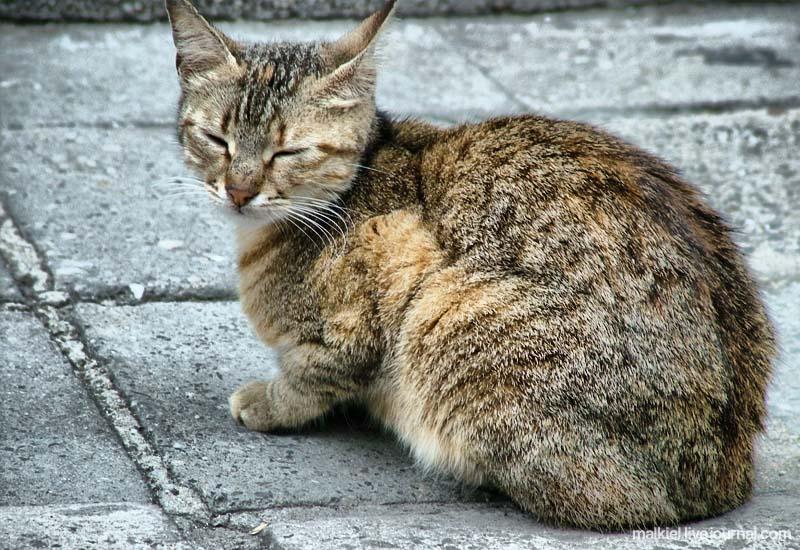 К какой породе относятся дворовые кошки, есть ли у нее название, или они все беспородные: фото и описание уличных котов